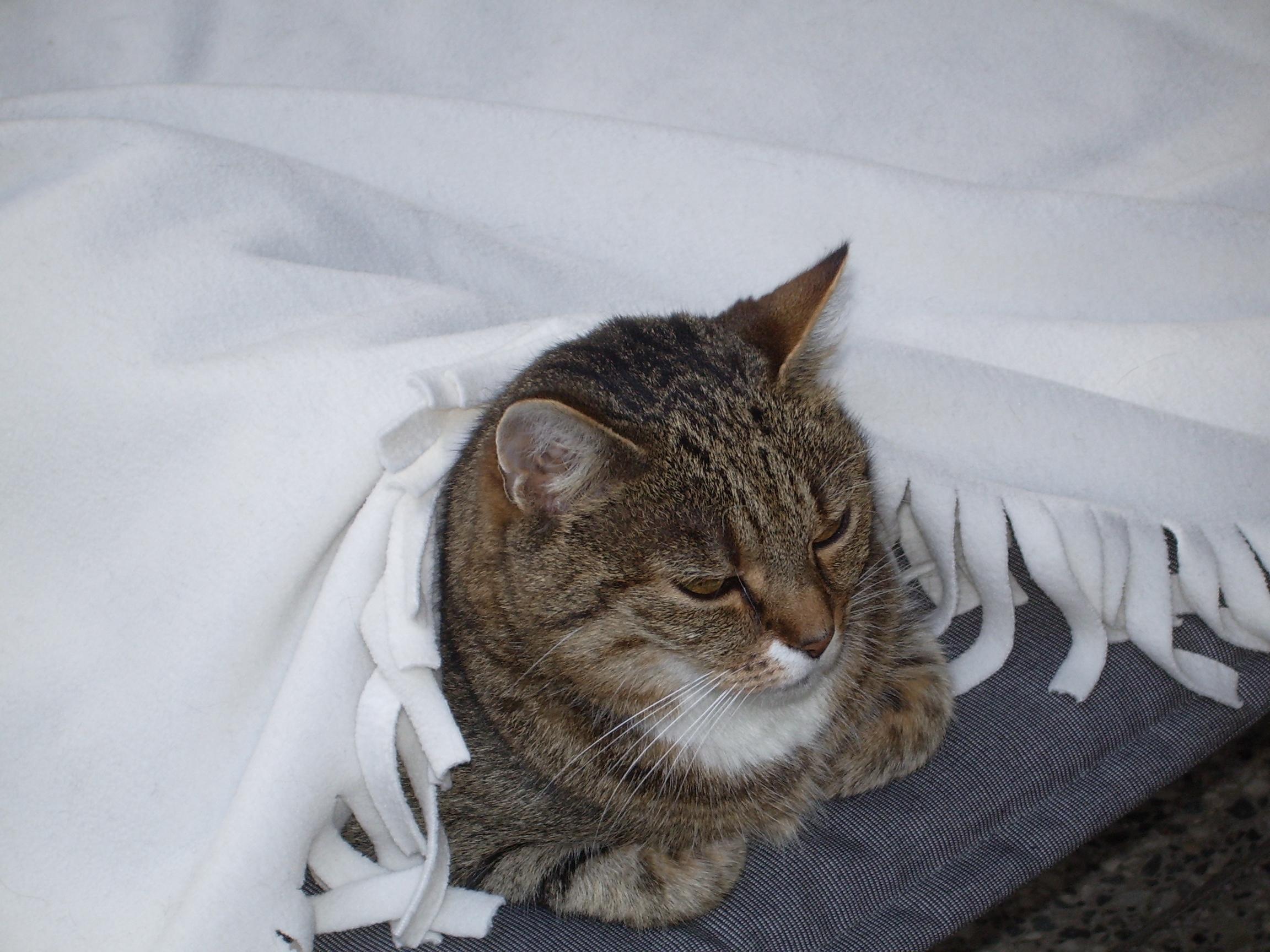 frankreich übernachten mit katze